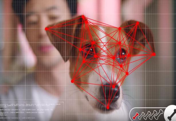 Pet é quem manda: rede lança ecommerce com reconhecimento facial para cachorros