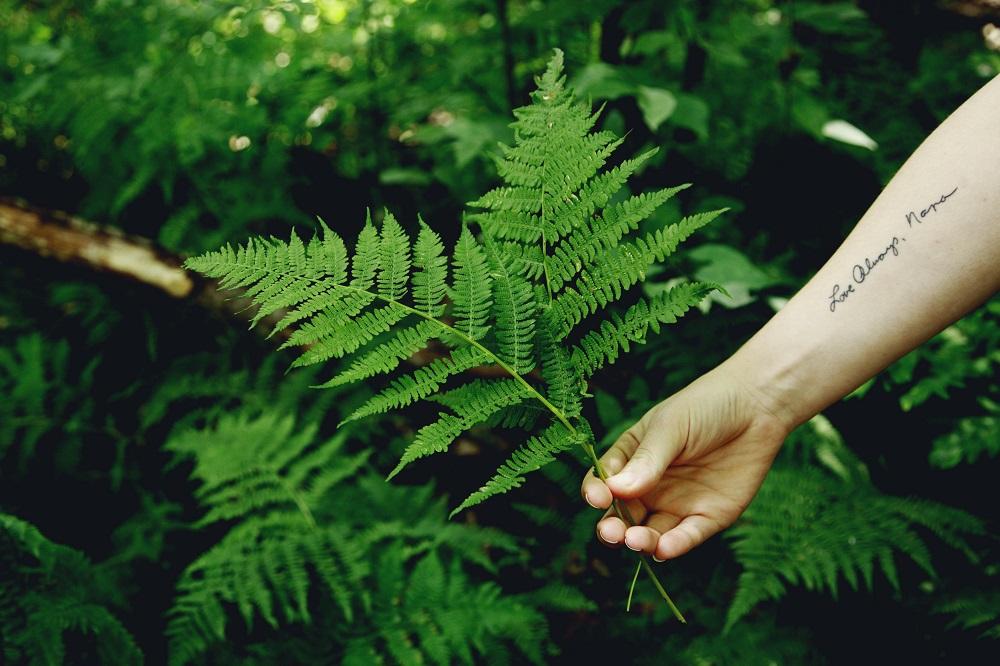 nativos ecológicos