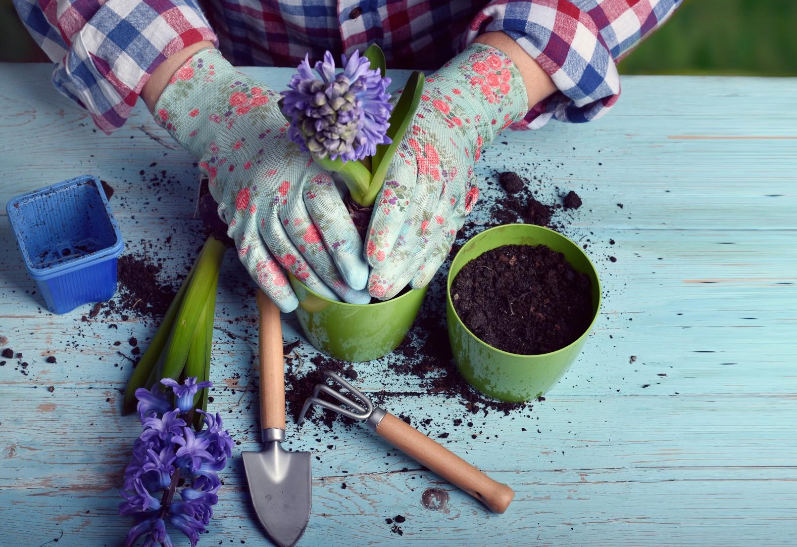 Cultivo de plantas em casa se torna hobbie e setor prevê crescimento