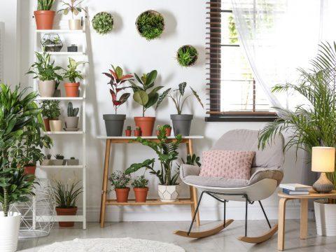 plantas em casa (1)